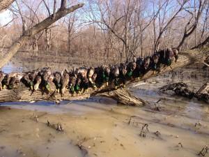 Big Creek Carnage